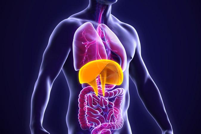diaphragme et respiration